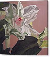 Christmas Bloom Canvas Print