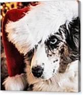 Christmas Cardigan Canvas Print