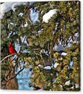 Christmas Cardinal Canvas Print