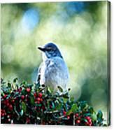 Christmas Mockingbird Canvas Print