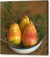 Christmas Pears In A Bowl Canvas Print