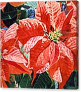 Christmas Poinsettia Magic Canvas Print