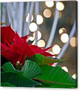 Christmas Poinsettia Canvas Print
