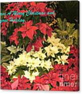Christmas Poinsettias  Canvas Print