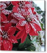 Christmas Poinsettia Flowers Canvas Print