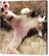 Christopher Paws Up Canvas Print