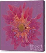 Chrysanthemum Digitally Softly Toned Canvas Print
