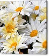 Chrysanthemum Flowers 4 Canvas Print