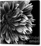Chrysanthemum In Black And White Canvas Print