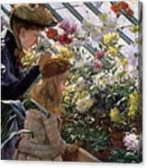 Chrysanthemums, 1890 Canvas Print