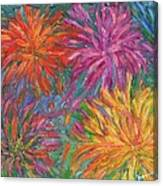 Chrysanthemums Like Fireworks Canvas Print