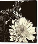 Chrysanthimum Canvas Print