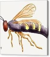 Cicada Killer Wasp Canvas Print