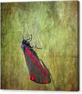 Cinnabar Moth Art Texture Wall Decor. Canvas Print