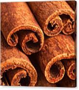 Cinnamon - Cinnamomum Canvas Print