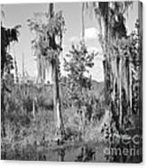 Circle B Swamp Canvas Print