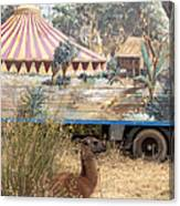 circus circus 2 - A vintage circus wagon with african paint and llama camel  Canvas Print