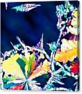 Citric Acid Microcrystals Color Abstract Art Canvas Print