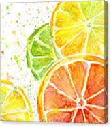 Citrus Fruit Watercolor Canvas Print