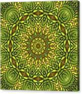 Citrus K12-33 Canvas Print