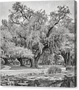 City Park Giants - Paint Bw Canvas Print