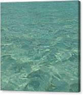 Clear Water Of Guam Canvas Print