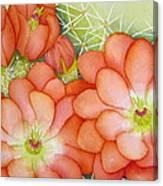 Claret Cups Canvas Print