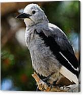 Clark's Nutcracker Canvas Print