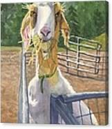 Claudette's Snack Canvas Print
