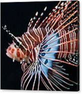 Clearfin Lionfish Canvas Print