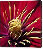 Clematis Center In Oils Canvas Print