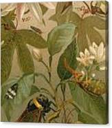 Clematis Cicada And Beetles 1894 Canvas Print