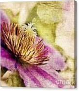 Clematis Closeup Canvas Print