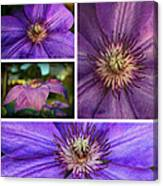 Clematis Collage Canvas Print