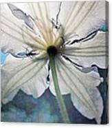 Clematis In Morning Sun Canvas Print
