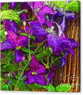 Clematis On The Fence-2014 Canvas Print