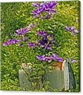 Clematis Vine On Mailbox Canvas Print