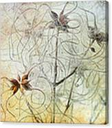 Clematis Virginiana Seed Head Textures Canvas Print