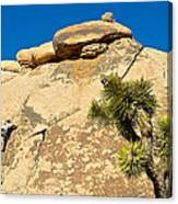 Climber At Quail Springs In Joshua Tree Np-ca Canvas Print