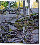 Climbing The Rocks Of Bald Mountain Canvas Print