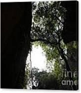 Climbing Up The Tree Canvas Print