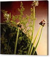 Clipped Stems Canvas Print
