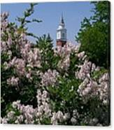 Clock Tower And Lilacs Canvas Print