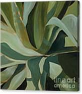 Close Cactus Canvas Print
