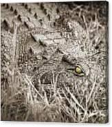 Close Crocodile  Canvas Print