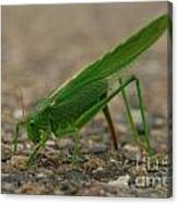 Close Encounter Of The Green Kind Canvas Print