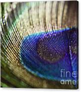 Close Feather Canvas Print