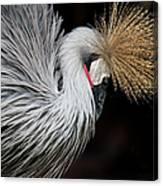 Close Portrait Of A Grey Crowned Crane Canvas Print