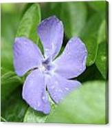 Close Purple Flower Canvas Print