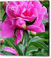 Close Up Flower Blooming Canvas Print